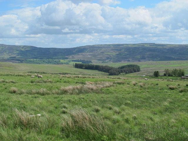 Moorland north of Craig