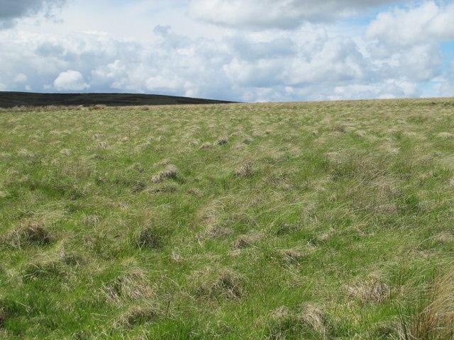 Moorland north of Combs Burn
