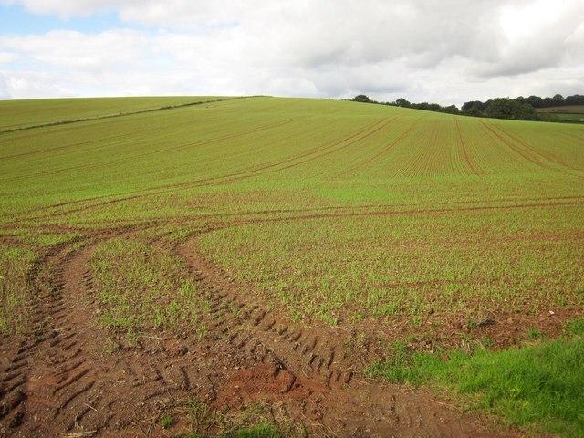 Crop near Ashbrook Lodge