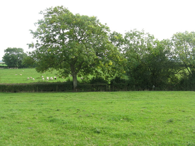Severnside fields at Awre