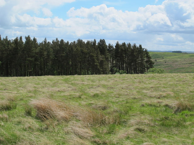Moorland and Combs Wood