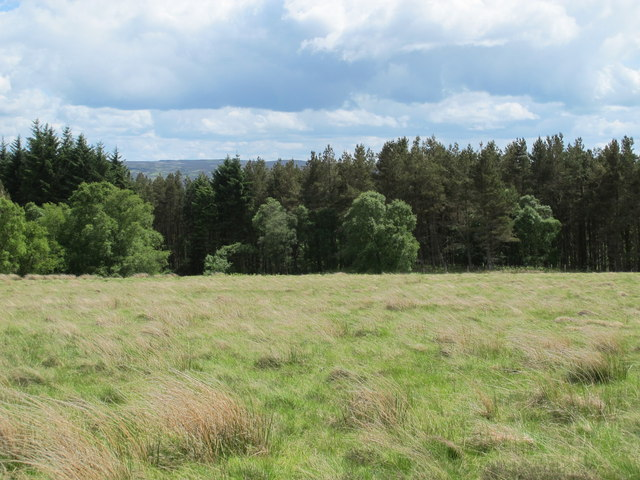 Moorland and Combs Wood (2)