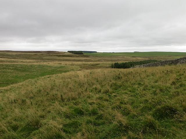 Edgarhope Moor