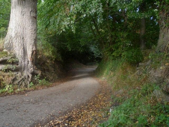 Ffordd droellog / A winding road