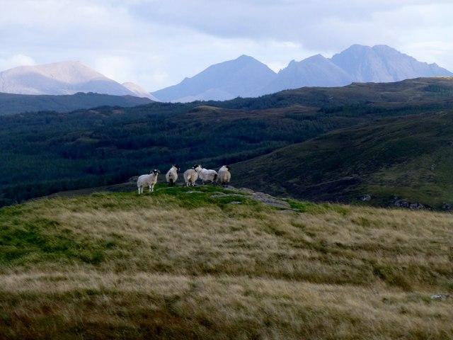 Sheep Cuillin View