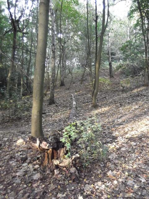 Woods off Punchbowl Lane