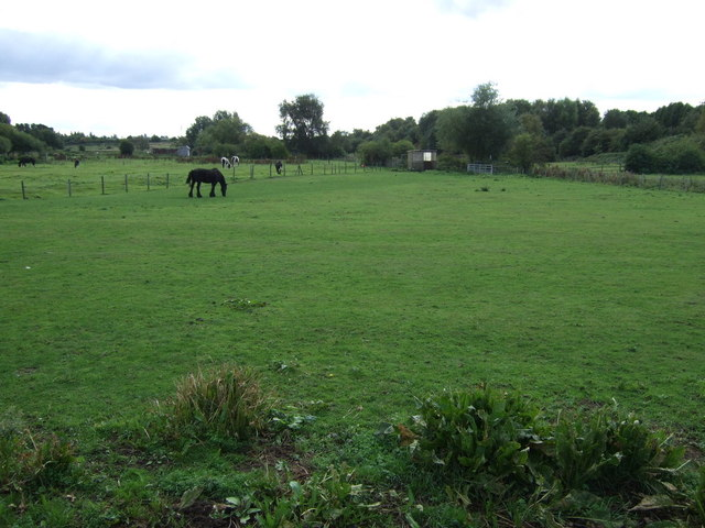Grazing near High Heath