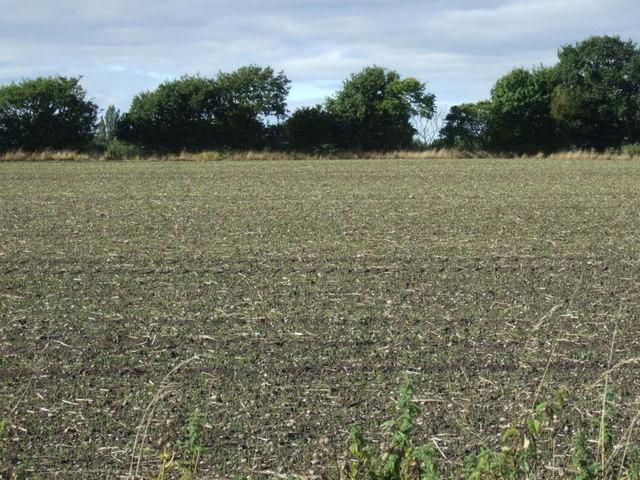 Farmland, Highbridge