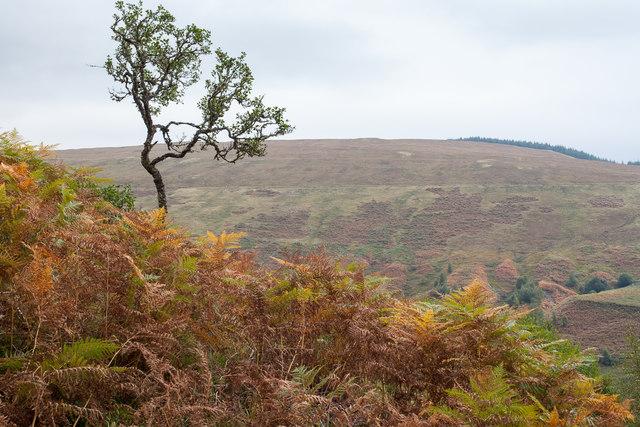 View across Glen Roy