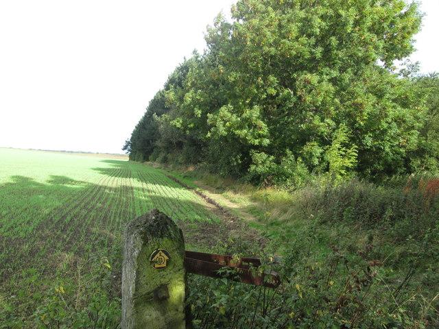 Barnsley Boundary Walk along Wheatley Wood