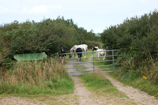 Horses at the entrance to Coed y Barch
