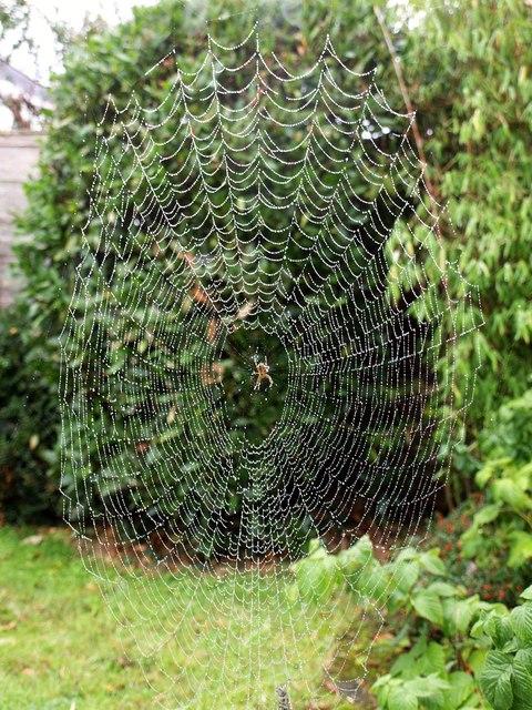 Spider's web, Torre