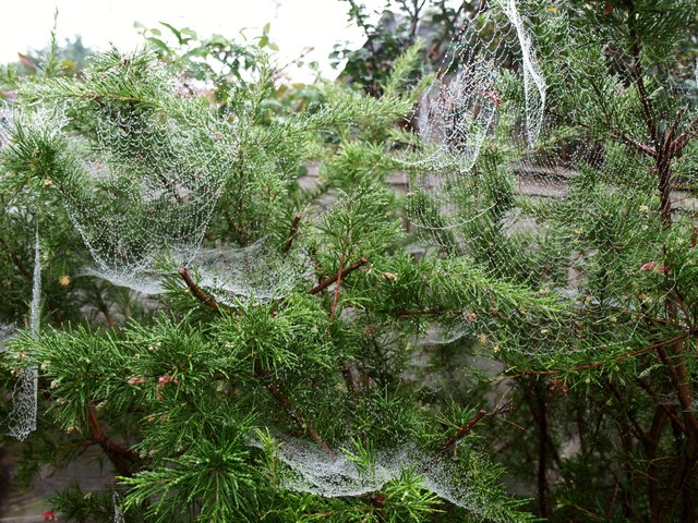 Spider's webs, Torre