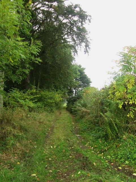 Farm track along edge of Finis Wood