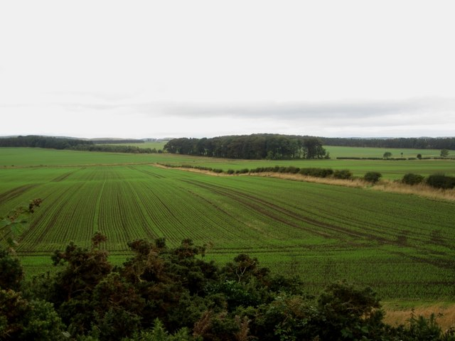 Recently emerged cereal crops north east of Laverock Law