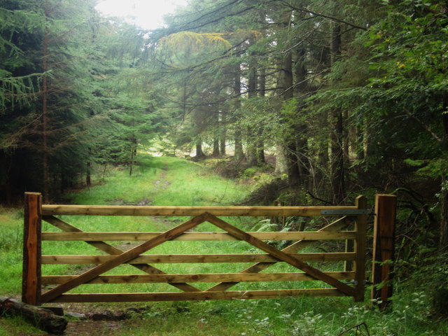 New gate across the track, Shiellow Wood