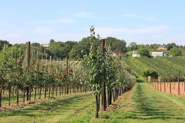 Orchards at Sargent's Farm