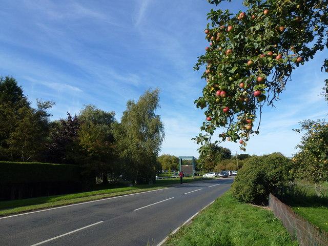 Apples on the roadside