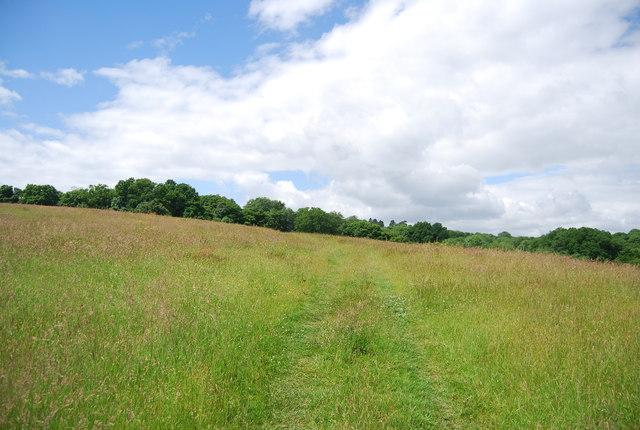 Footpath across a meadow