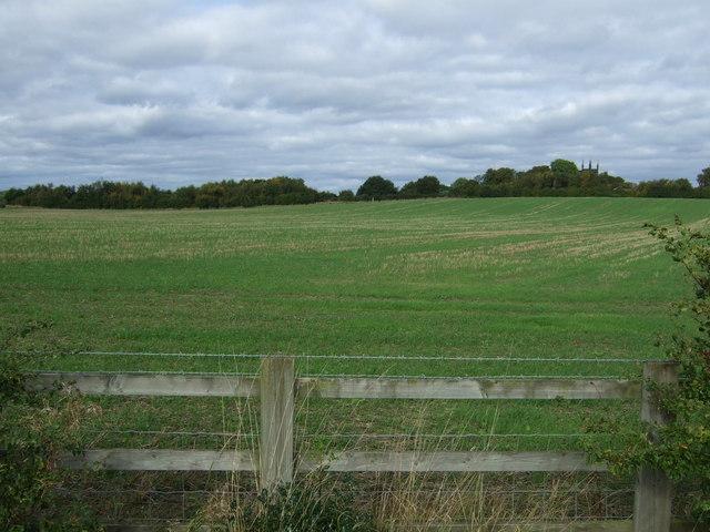 Farmland off Norton Hall Lane