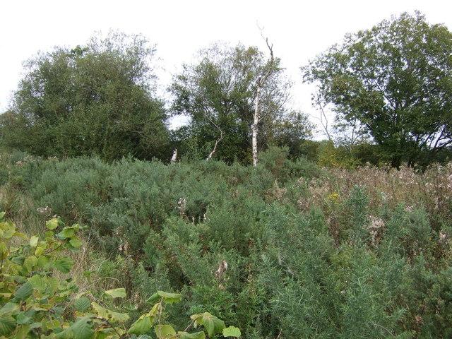 Woodland beside Lime Lane