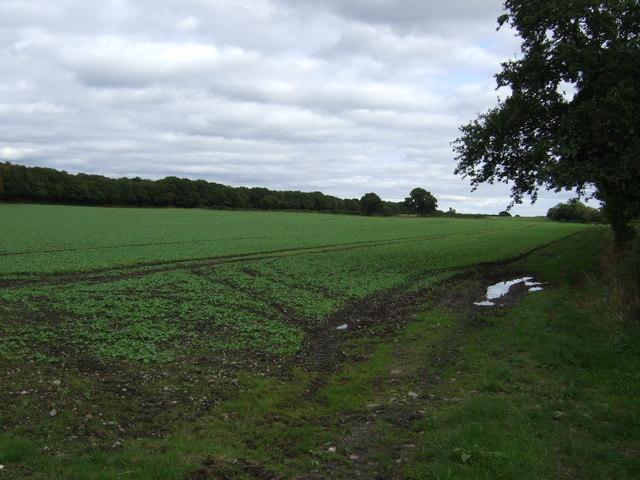 Farmland east of Lime Lane