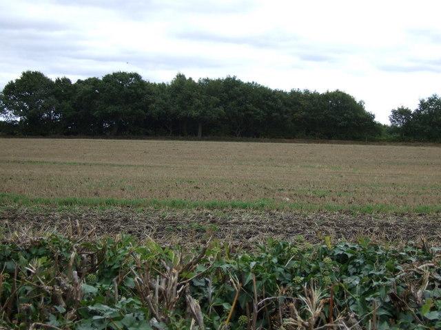 Farmland, Huddocks Moor