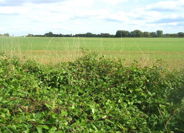 Shothanger field (63.5 acres)