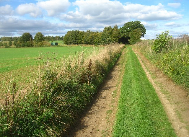 Byway towards A339 from Whitedown