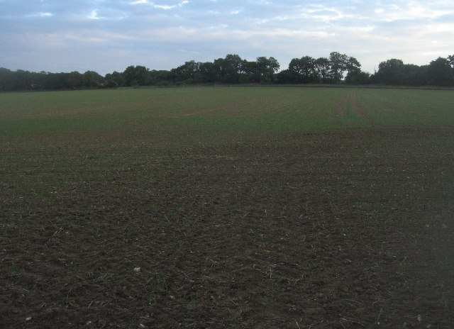 Early evening - Great Wildcroft Field