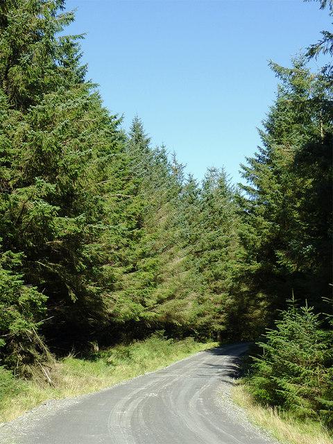Forestry road in Coed Nant-yr-hwch, Powys