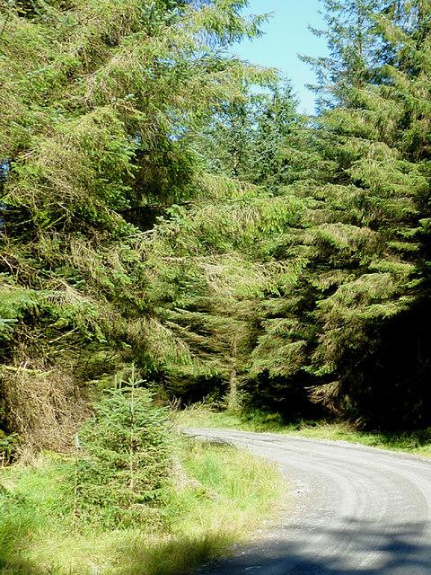 In Coed Nantyrhwch, Powys
