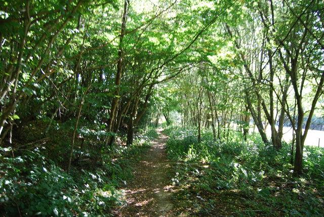 Bridleway, Wellhead Wood East