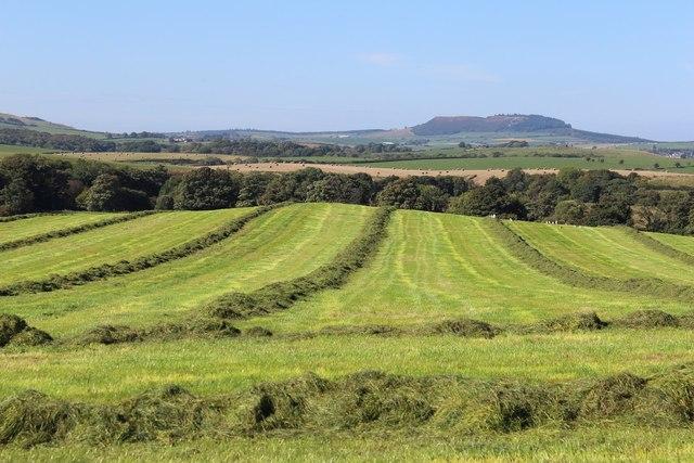 Newly-Cut Hay at Barbrethan