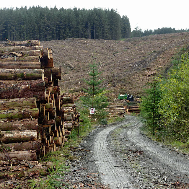 Forestry operations on Cefn Coch, Powys