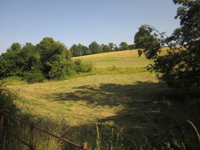 Hillside near Witheridge Mill Cross