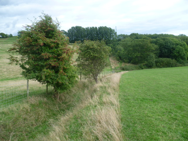 Saxon Shore Way near Blackthorn Wood