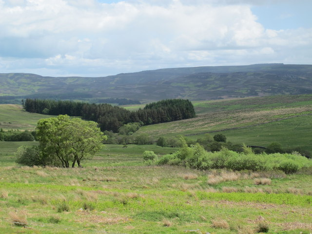 Rough pastures and woodland above Keenshaw Burn