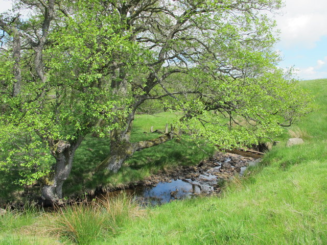 Rough pastures and woodland around Keenshaw Burn