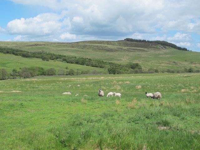 Rough pastures south of Keenshaw Burn