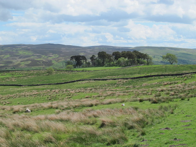 Moorland north of High Shaw
