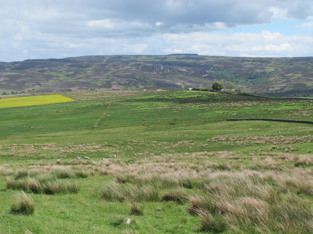 Rough pastures northwest of Herdlaw
