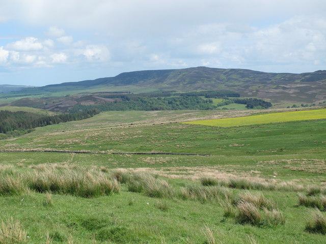Rough pastures north of Herdlaw