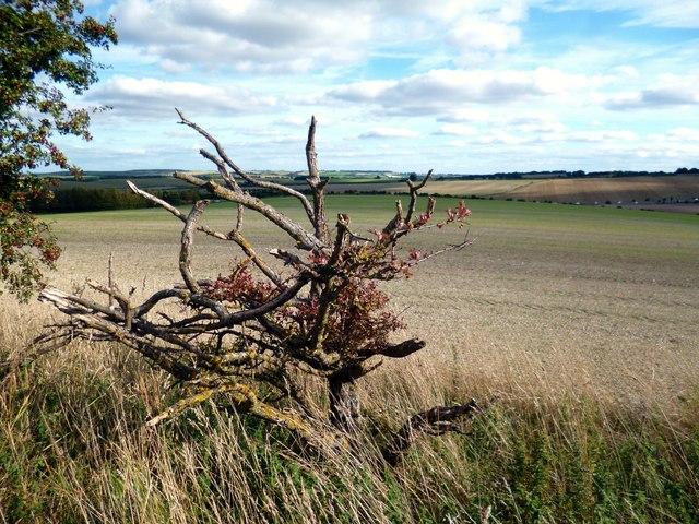 Land near East Ilsley