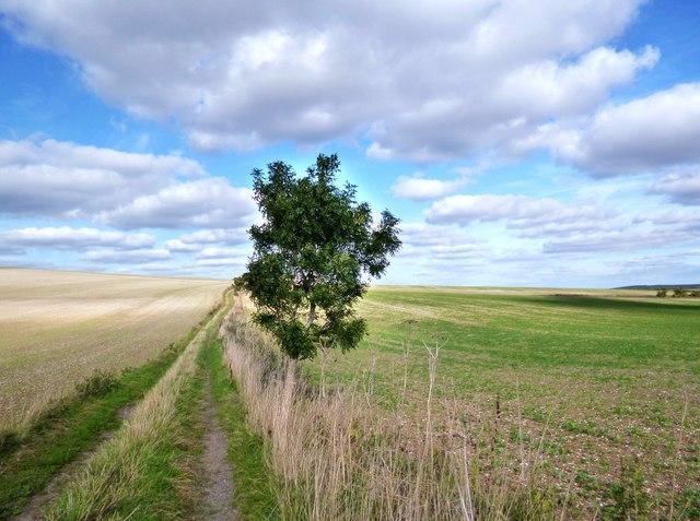 Bridleway near East Ilsley