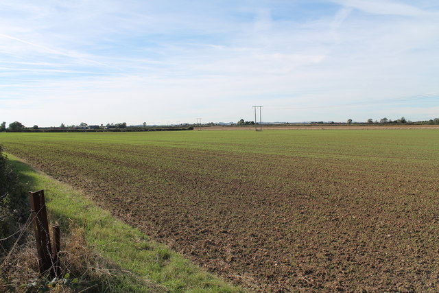 Field with young crop off Marsh Lane