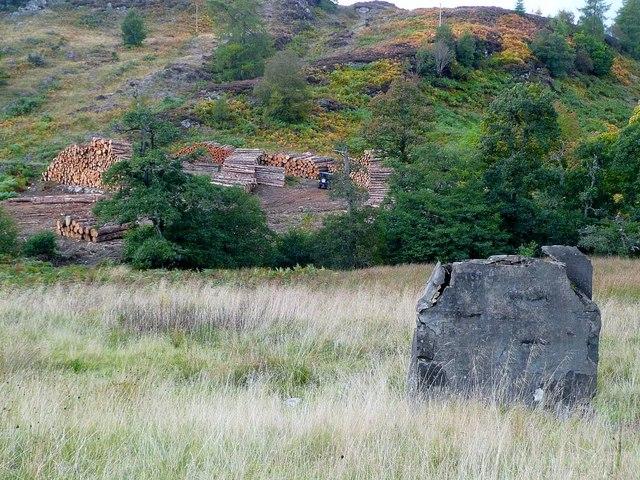 Logging near The Glack