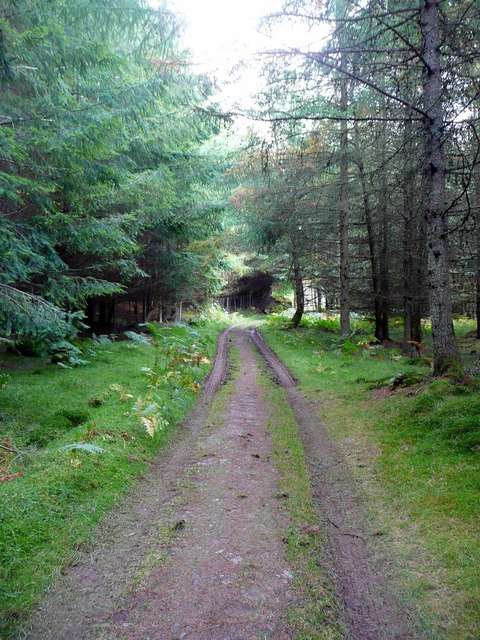 Track through Drumbuie Wood