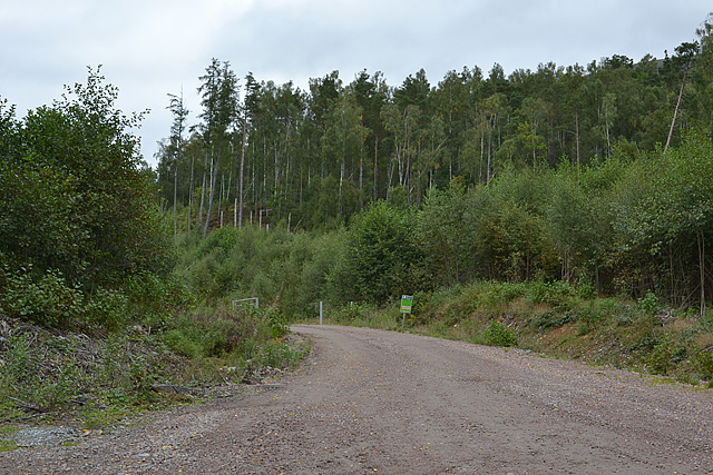 Forestry road north of Loch Arkaig