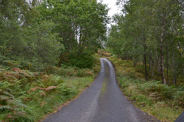 The Arkaig road running through woodland